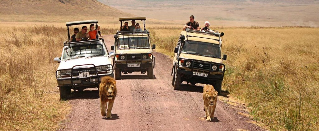 Custom Safari Tours